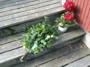 eroakiireesta_Elämänlaatua Juvalla_Mikkelin seudulla_vasta ja kukka_Martti Ripaoja
