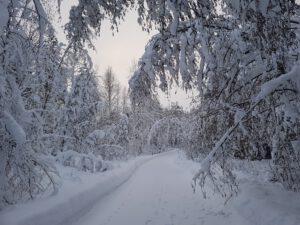 eroakiireesta_talvi Pertunmaalla_Mikkelin seutu_lumiset puut_Heidi Manninen
