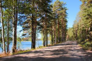 eroakiireesta_metsäinen tie järven rannalla_Mikkelin Suomenniemi