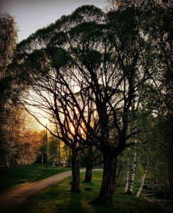 Upeita puita Mikkelissä.