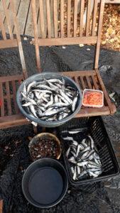 Olli Tiaisen kalasaalis Puulalla. Kangasniemi.
